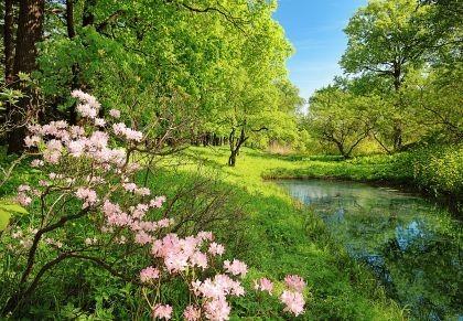piękny pejzaż wiosenny